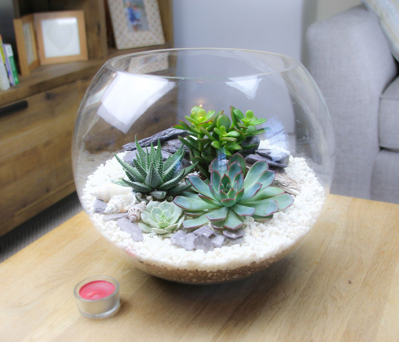 Extra Large Glass Globe Terrarium With 4 Succulent Plants