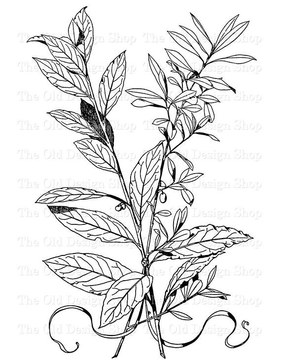 Wall Decoration Png