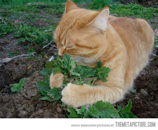 If You Don T Talk To Your Cat About Catnip Who Will Animals Cats And Kittens Cats