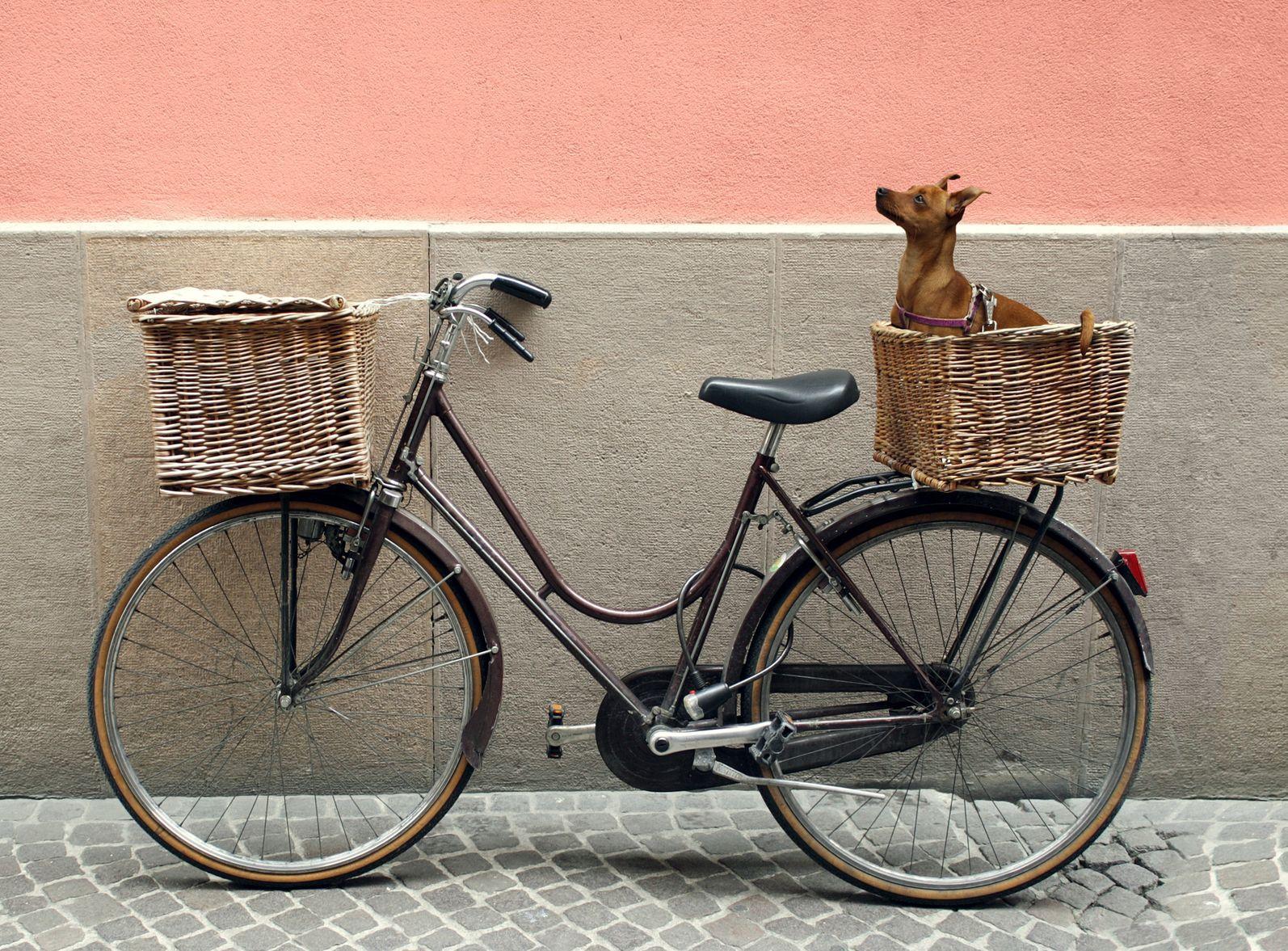 Best Dog Basket For Bike Dog Bike Basket Biking With Dog Dog