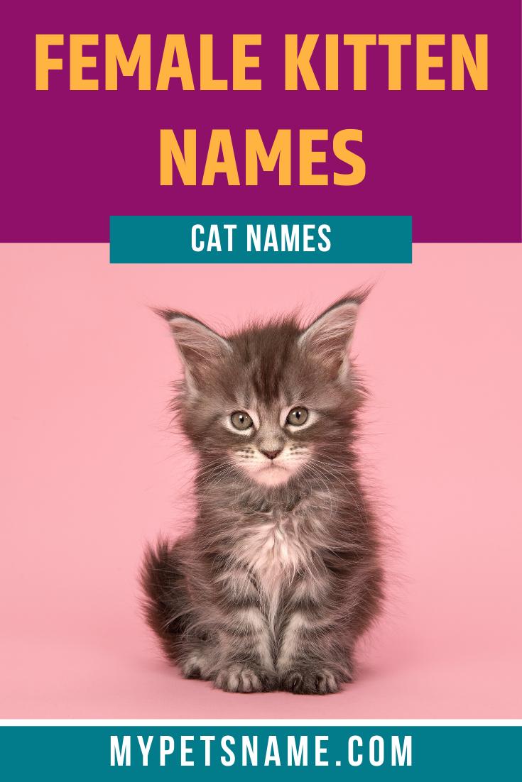 Girl Female Cat Names In 2020 Cute Cat Names Cat Names Cute Names