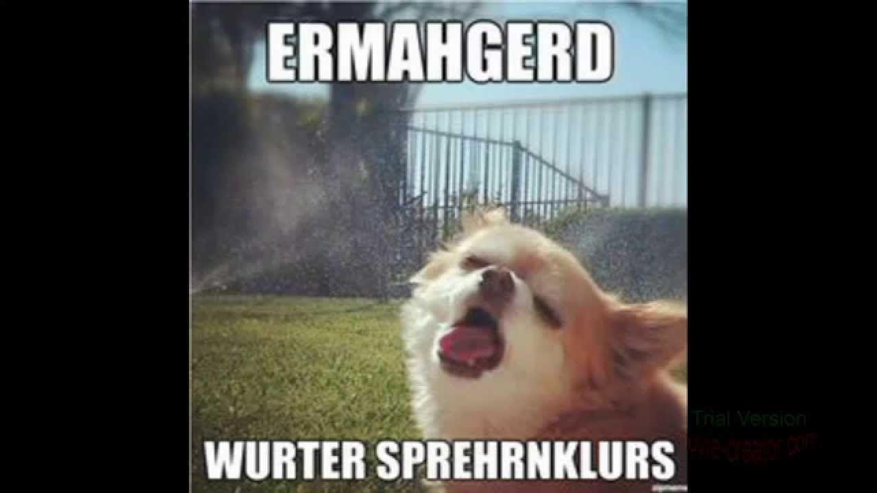 10 Funny Dog Memes Funny Dog Memes Funny Meme Pictures Dog Memes