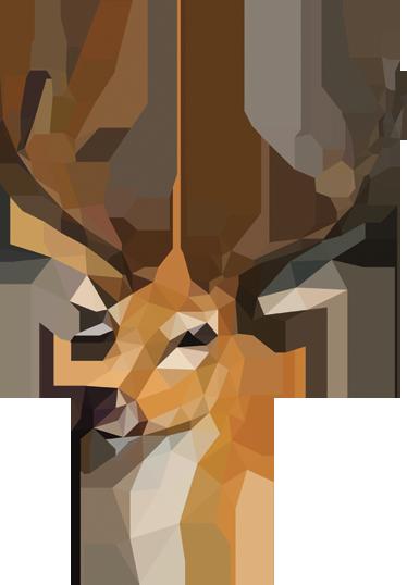 60 Best Deer Images Deer Animals Wild Animals Beautiful
