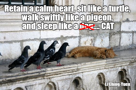 Li Ching Yuen Quote Funny Cat Memes Silly Cats Cat Memes