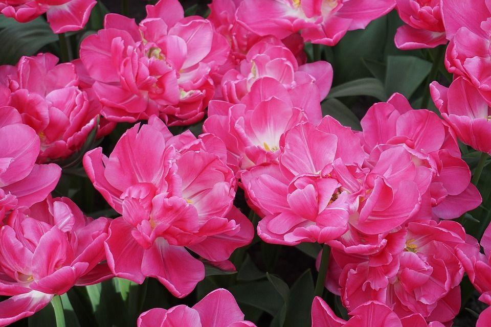 Pin by Lyudmila Parkhomchuk on Beautiful ️ Flowers