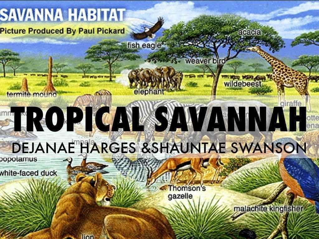 Pin by Philippe Marangoz on Tropical WetDry / Savanna