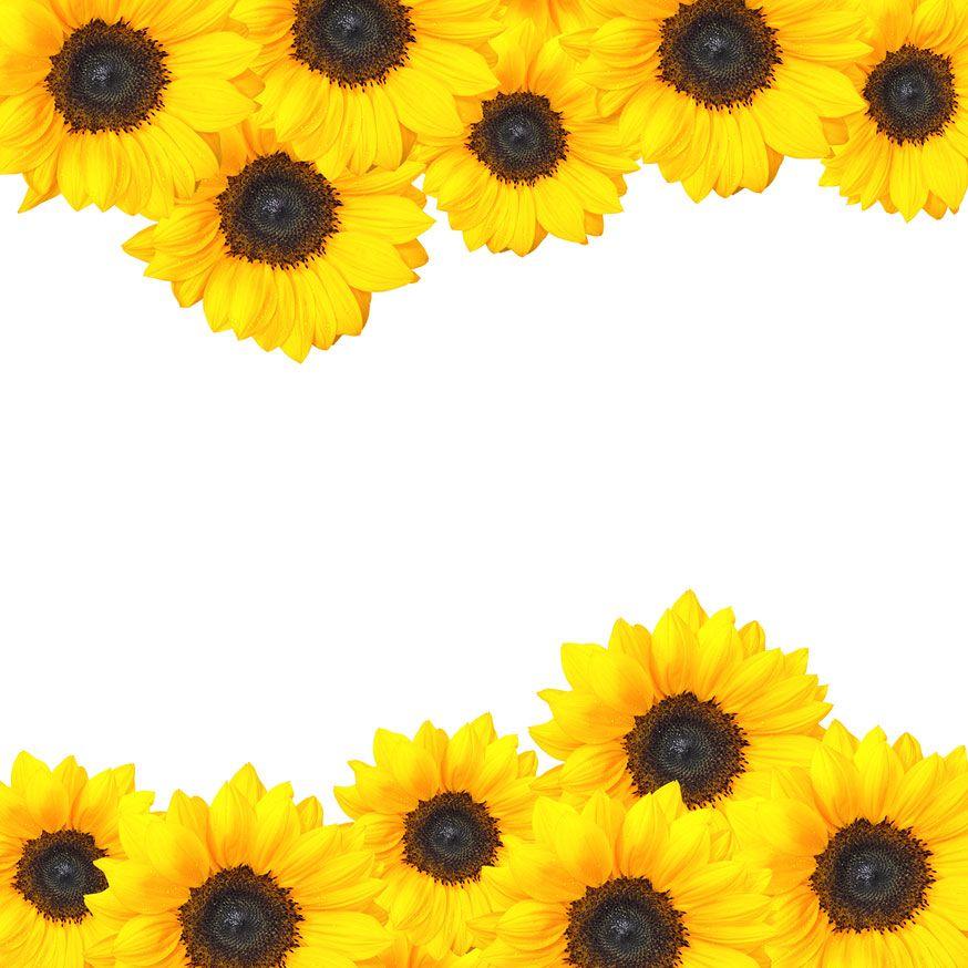 Sunflower Border Png Sublimation Tumbler Design Digital Etsy In 2021 Tumbler Designs Sunflowers Background Sunflower Design