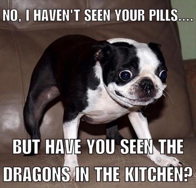@aleighwhit #funnydogs