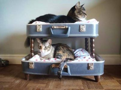 Great idea for cat beds