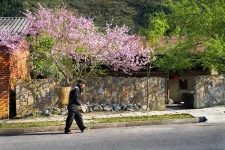 Spring Photo by The Nguyen — National Geographic Your Shot