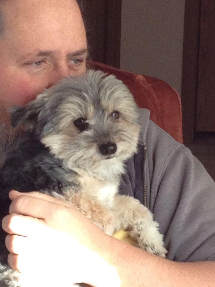 Yogi is Mike's little buddy