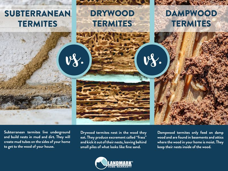 All about termites and how to get rid of an infestation di
