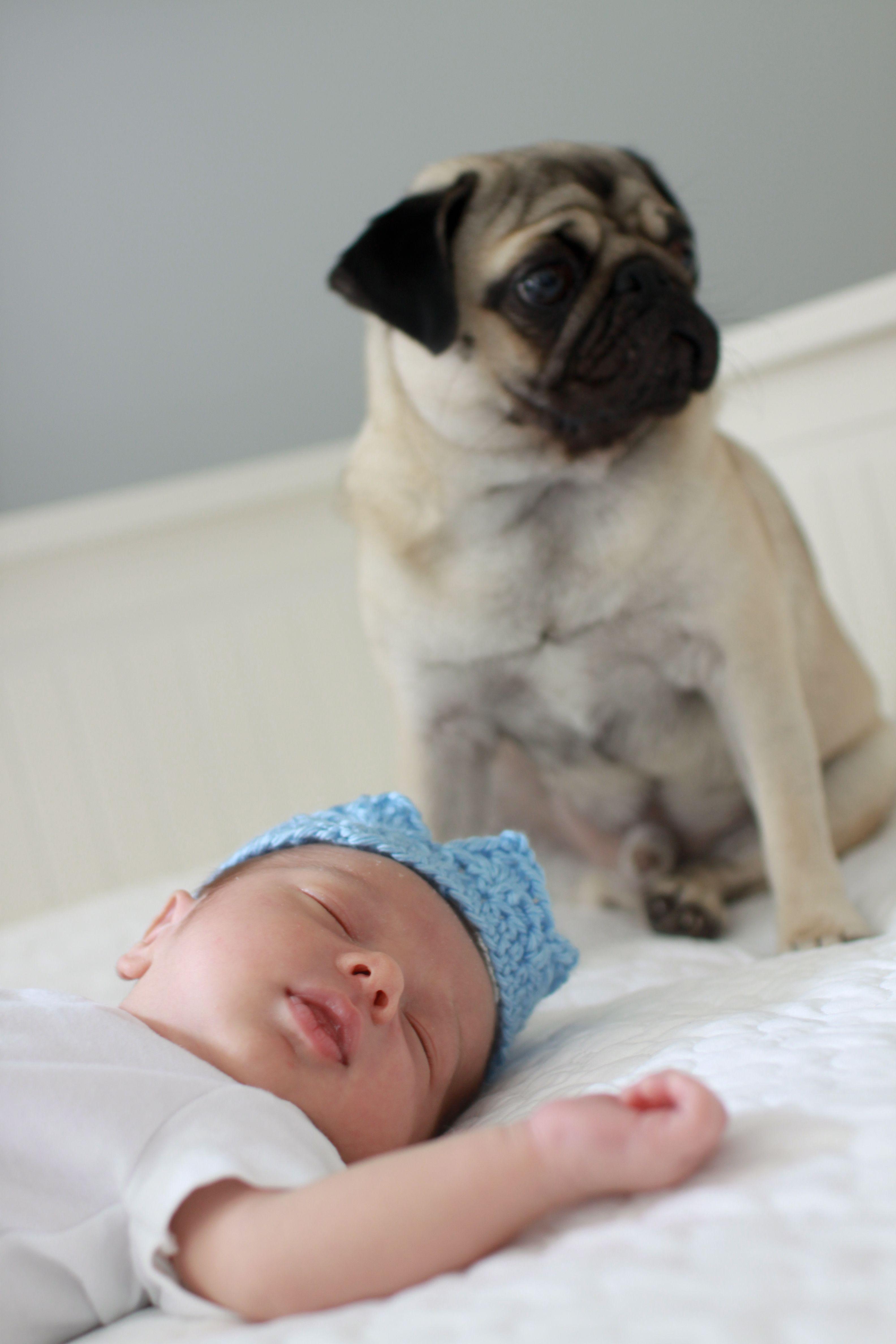 Newborn Baby Portraits Pug Puppy Dog New York City Manhattan