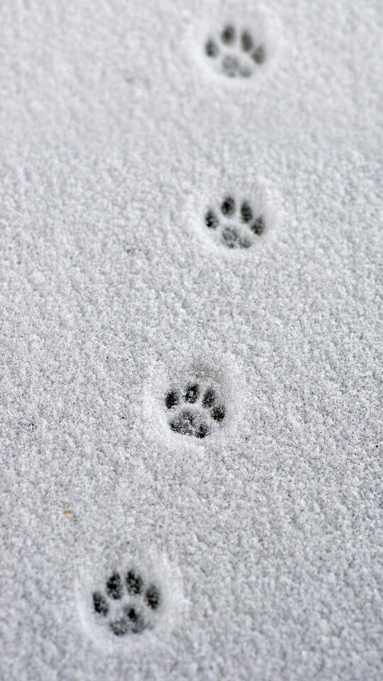 Little paw prints in the snow. #blue