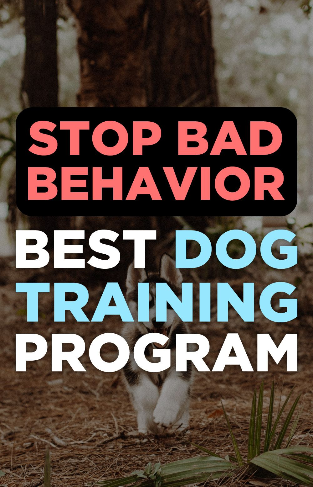 Brain Training For Dogs Review Therapy Dog Training Best Dog