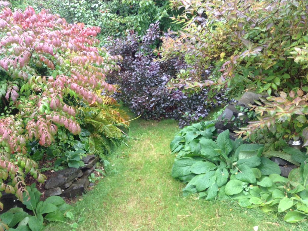 The smoke bush peaking through in the back :) (With images ...