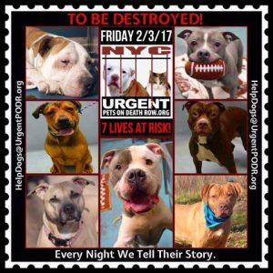 Dedicated To Saving Nyc Shelter Animals Best Dogs For Families Animal Help Cat Adoption