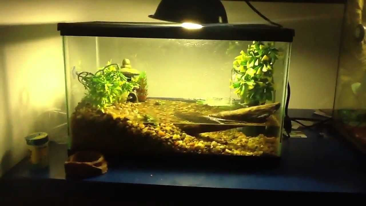 fire belly toad tank   google search frog lizard