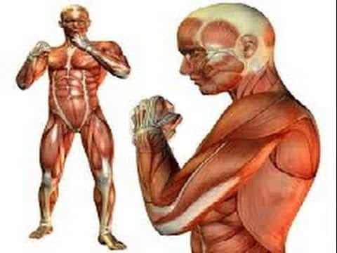 Pin By Zren On 人体动态图 Pinterest Anatomy Muscle And Anatomy