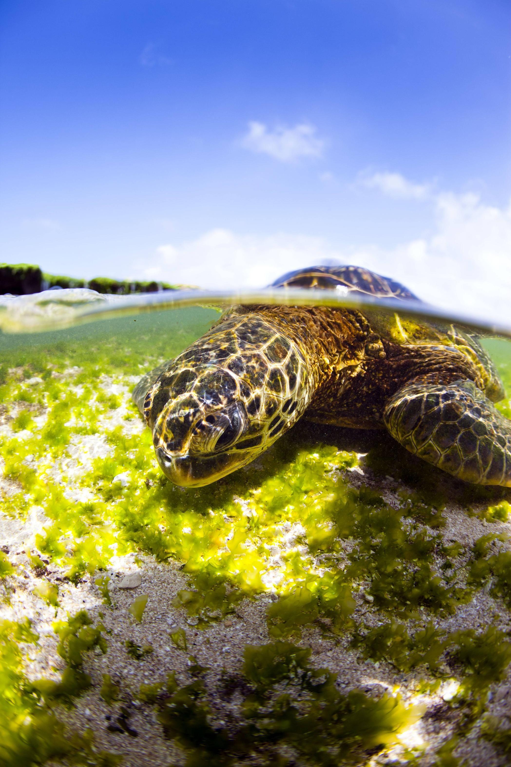 Do You Like Sea Turtles Turtle Turtle Love Sea Turtle