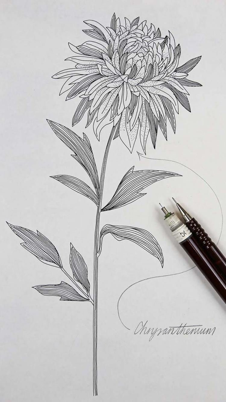 Pin by Mikenna Fuller on Tattoo goals Chrysanthemum