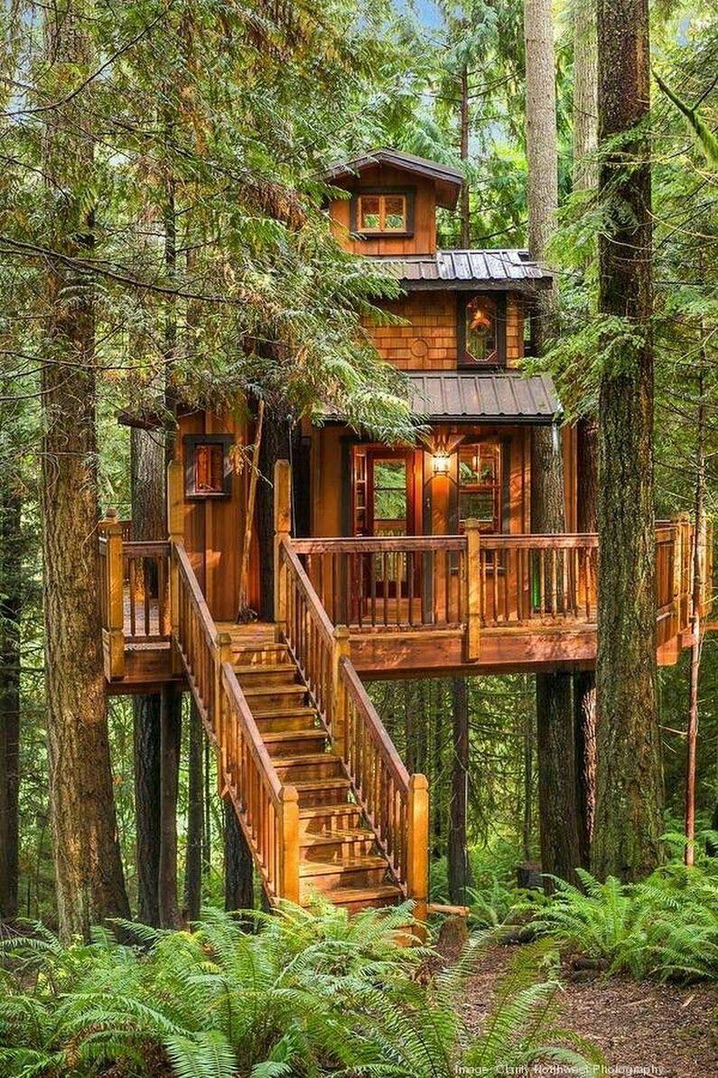 Pin von Douglas Sandberg auf Tree Houses   Pinterest