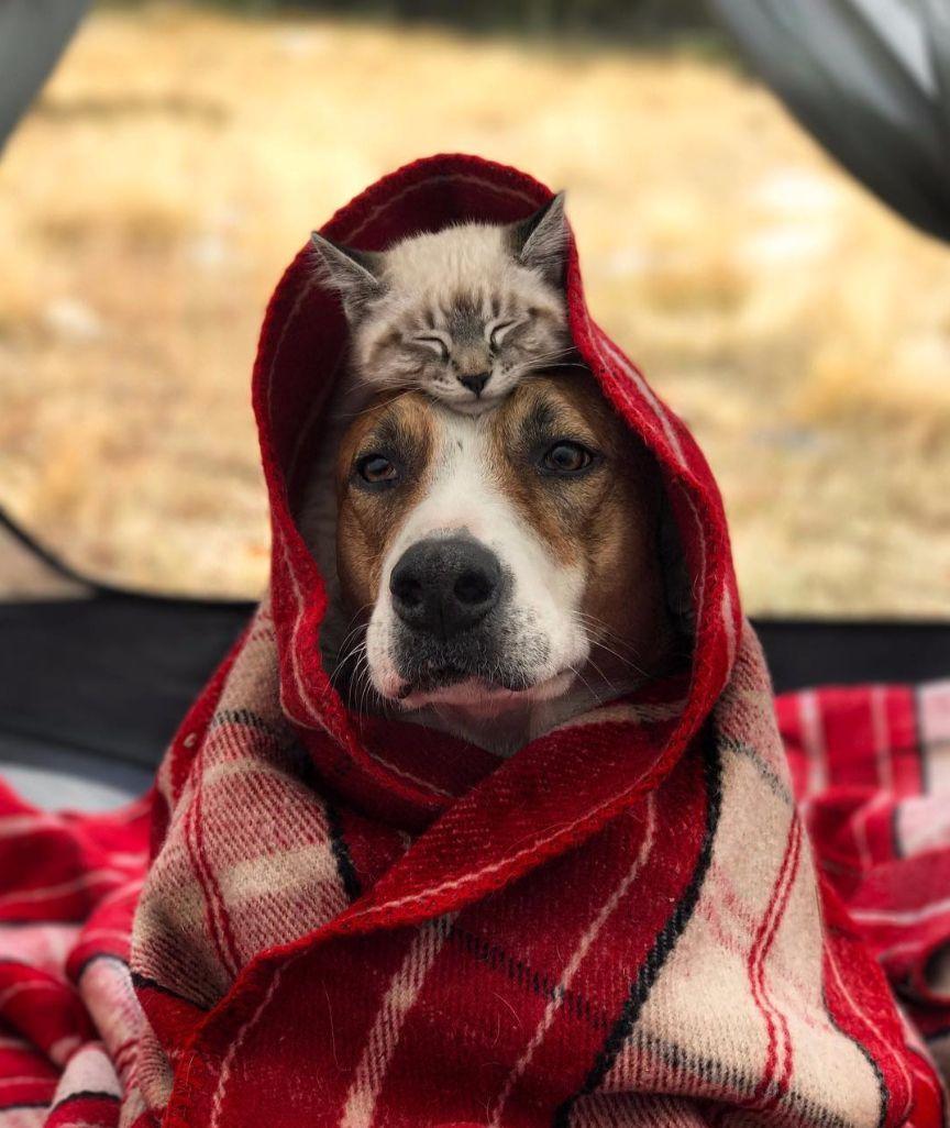 Photo of Hund bereist mit Katze die Welt