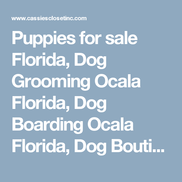 Puppies For Sale Florida Dog Grooming Ocala Florida Dog Boarding Ocala Florida Dog Boutique Cass Bulldog Grooming Teacup Puppies Maltese Organic Dog Treats
