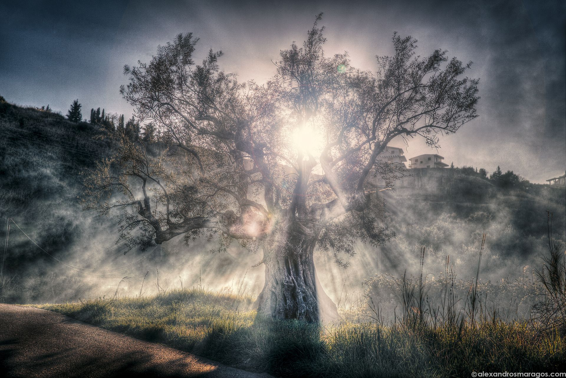 Photograph Tree of Life by Alexandros Maragos on 500px