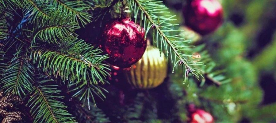 Philadelphia's Christmas Tree Recycling Program (Photo by Tj ...
