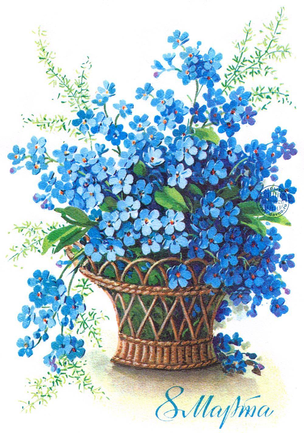 Открытка цветы незабудки, днем