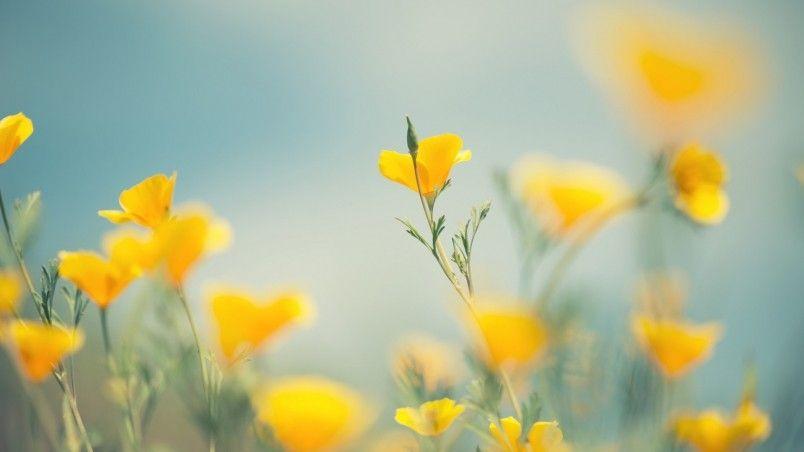 Little Yellow Flowers Hd Wallpaper Wallpaperfx Yellow Flower Wallpaper Flowers Nature Yellow Flowers