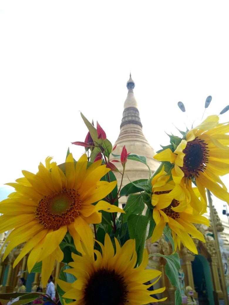 ShweDaGonePagoda&Sunflower Holiday decor, Christmas