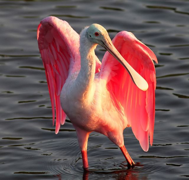 Pin on Birds - Natures Art