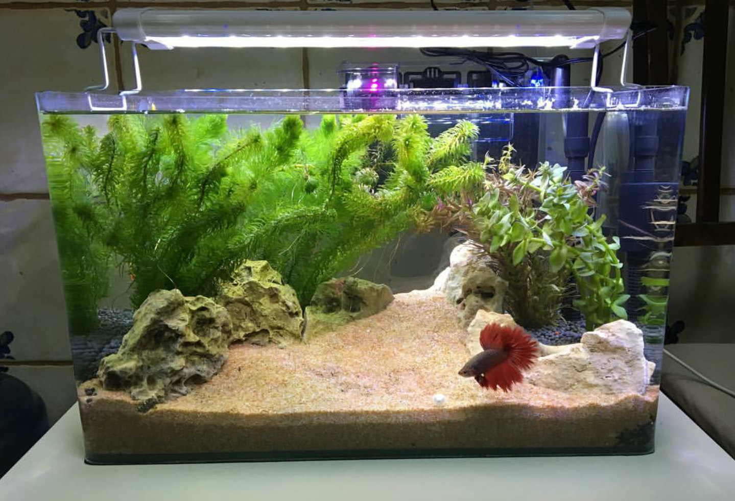 Betta Planted Tank With No Co2 By Khalilem From Instagram Betta Fish Tank Fish Tank Themes Tropical Fish Tanks