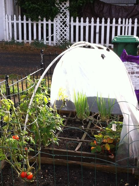 How To Make An Inexpensive Greenhouse For Your Raised Bed