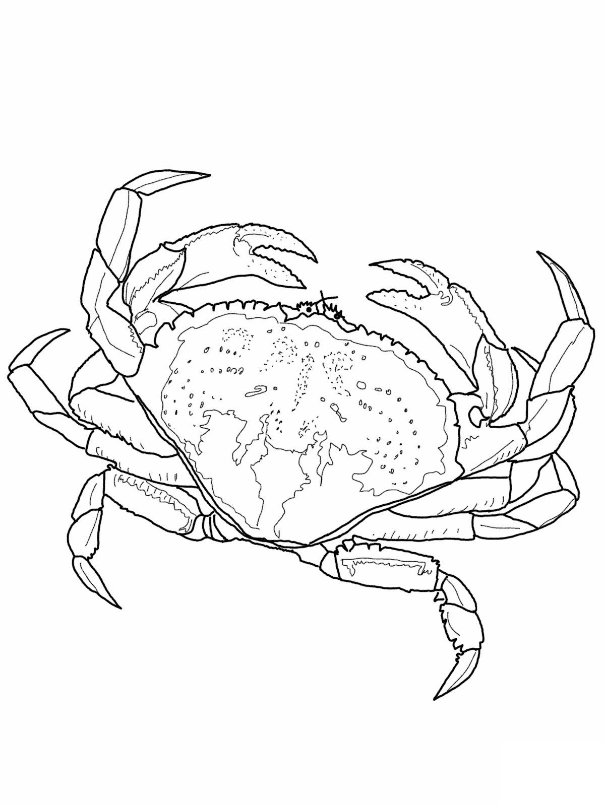 pictures of crab coloring pages - Crab Coloring Pages