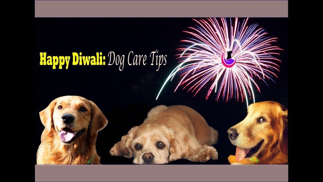 Happy Diwali Dog Care Tips In Hindi Dog Care