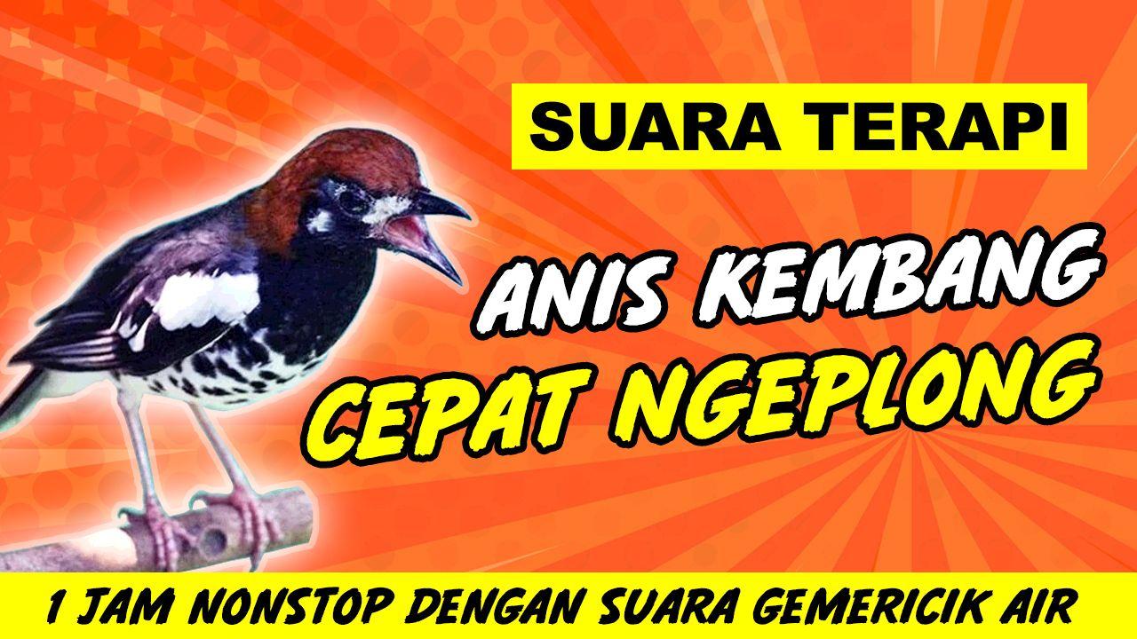 Pin Di Kicau Mania Indonesia