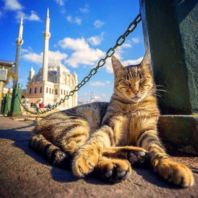 Стамбул смешные фото