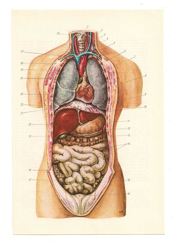 Human anatomy poster medical art anatomical print anatomy medical ...