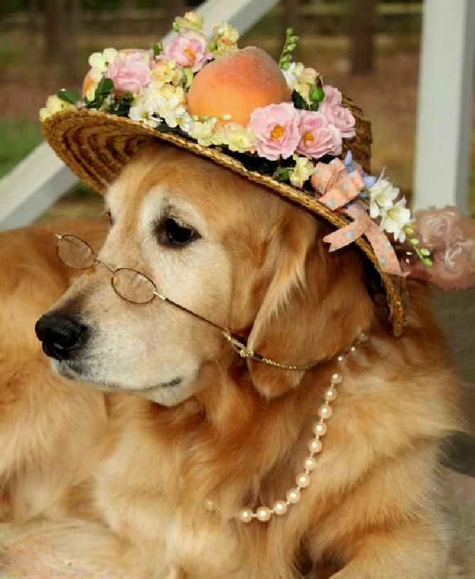 Put On Your Easter Bonnet Dog Dresses Dog Love Baby Dogs