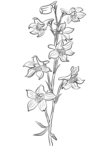 Image Result For Larkspur Flower Line Drawing Stamp