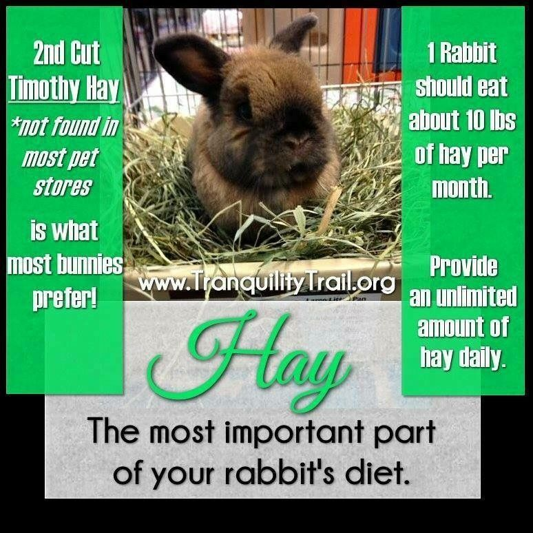 Pin Pa Hay For Rabbits