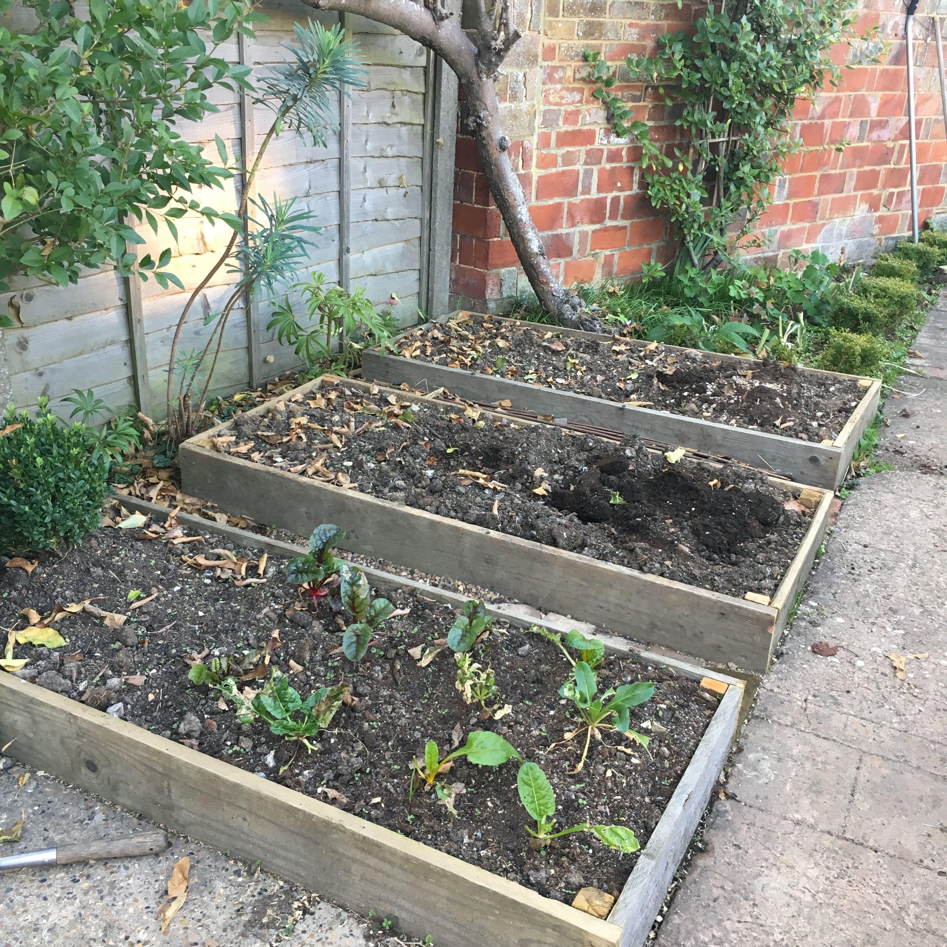 Plants, Fairy Garden, Garden