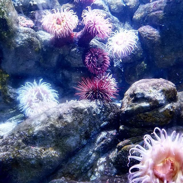 """""""With friends like these who needs anemones?"""" We were"""