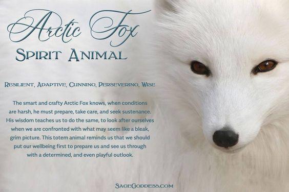Artic Fox Spirit Animal   Spirit Animals   Fox spirit, Spirit animal
