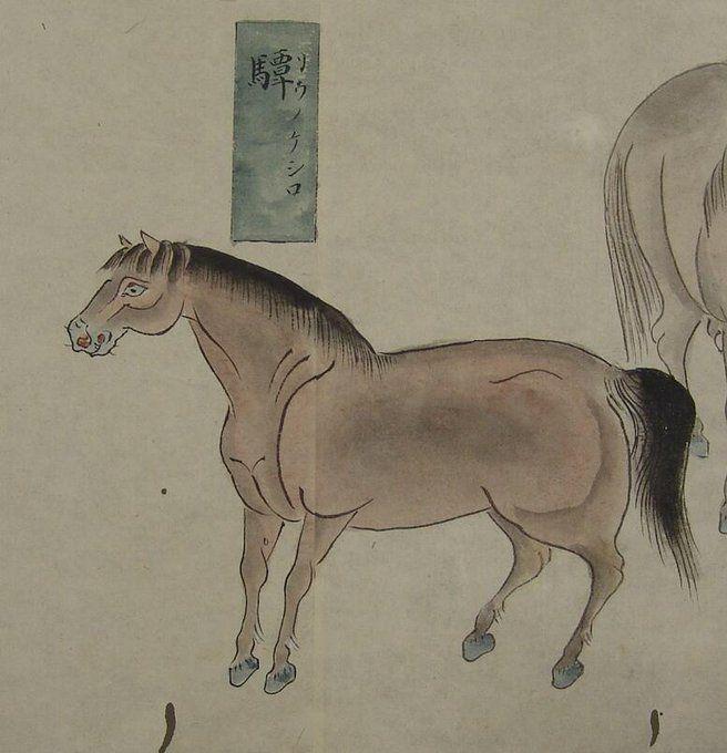 江戸時代の馬の図鑑 馬相図 2ページ目 togetter 馬 図鑑 象