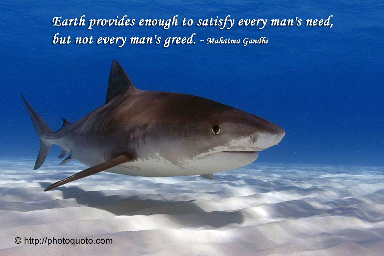 Mahatma Gandhi Quote With Tiger Shark Pic Both Life