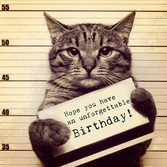 Happy Birthday Cat Wishes: Funny Birthday Meme With A Cat In A Police #birthdaymeme
